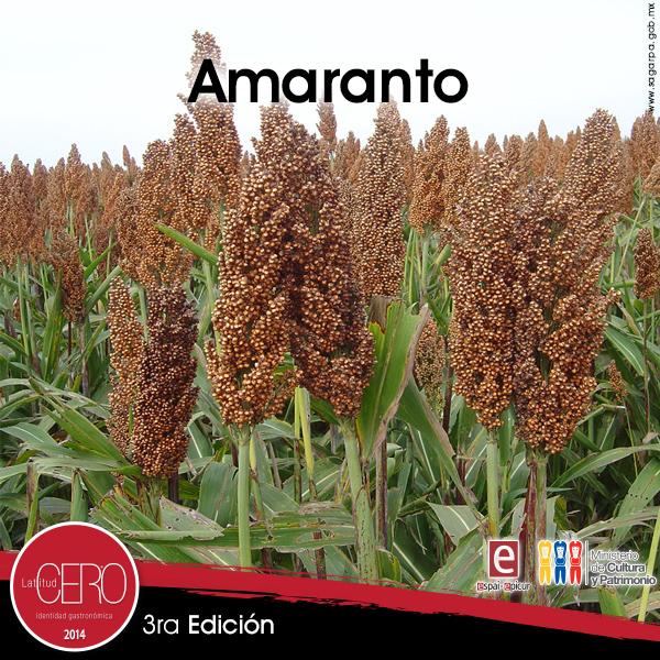 amaranto_ESPAI_2014
